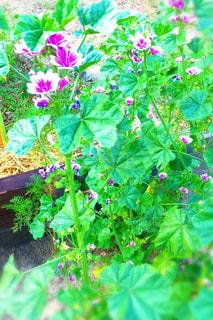 花の写真・画像素材[156883]