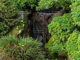 森の中の小さな滝の写真・画像素材[3631362]
