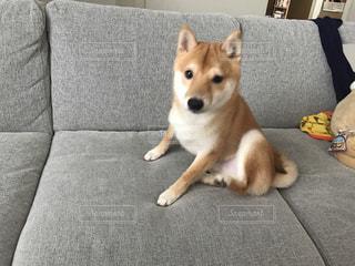犬の写真・画像素材[2399787]