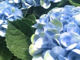 緑の植物のクローズアップの写真・画像素材[3635462]