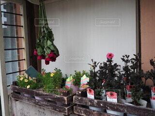 お花屋さんの店先の写真・画像素材[3697734]