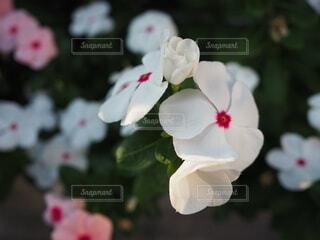 花のクローズアップの写真・画像素材[3715652]