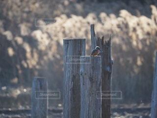 木の塀の上に座っている鳥の写真・画像素材[4144566]