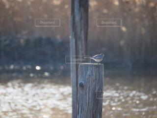 木の棒の上に座っている鳥の写真・画像素材[4144571]