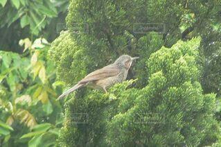 庭に来た鳥の写真・画像素材[3650090]