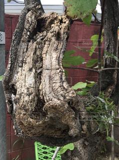 木のクローズアップの写真・画像素材[3748201]