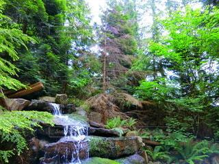 森の中の滝の写真・画像素材[3658511]
