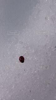雪の上のてんとう虫の写真・画像素材[3661076]