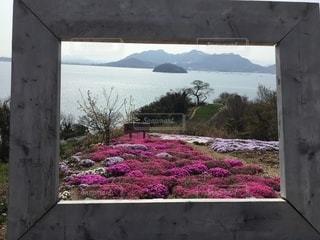 花園のクローズアップの写真・画像素材[3637393]