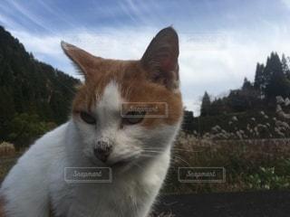 猫の写真・画像素材[3637733]