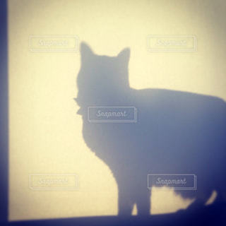 猫が好きの写真・画像素材[140411]
