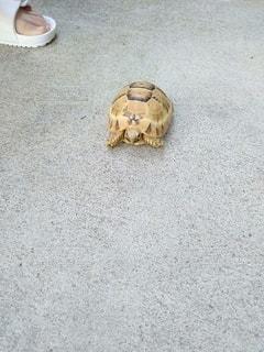 カメコ散歩の写真・画像素材[3642324]