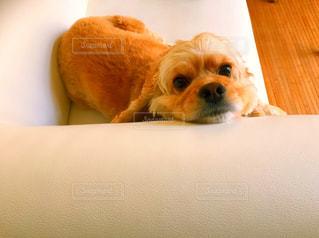 犬の写真・画像素材[254182]