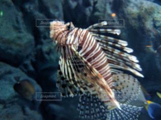 魚の写真・画像素材[205587]