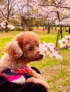 春のいい香りの写真・画像素材[3681732]