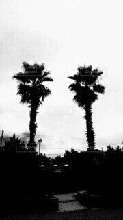 木の隣にあるヤシの木の群の写真・画像素材[3652556]