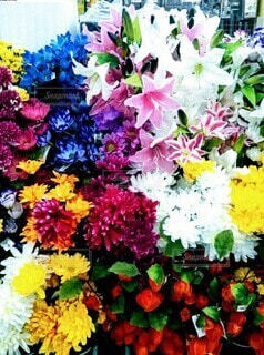 花のクローズアップの写真・画像素材[3653533]