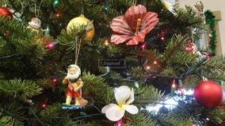 ハワイのクリスマスツリーの写真・画像素材[3678121]