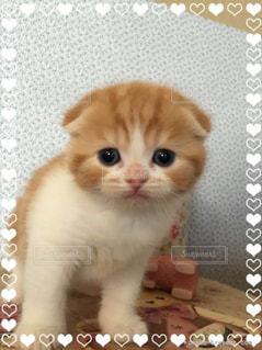 猫の写真・画像素材[152206]