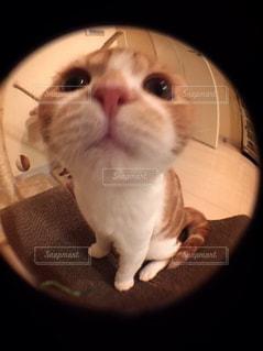 猫の写真・画像素材[152219]