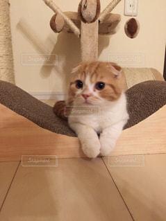 猫の写真・画像素材[152738]