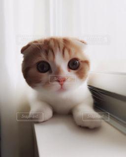 猫の写真・画像素材[152740]