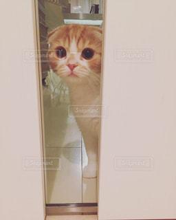 猫の写真・画像素材[152743]