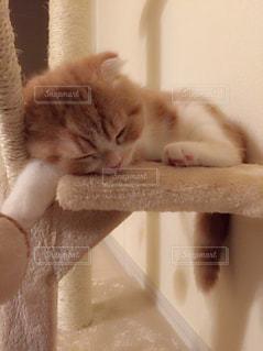 猫の写真・画像素材[152744]