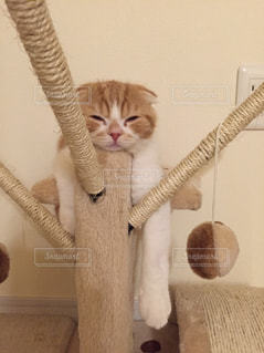 猫の写真・画像素材[152752]