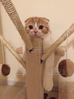 猫の写真・画像素材[152753]
