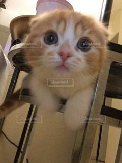 猫の写真・画像素材[152755]