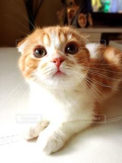 猫の写真・画像素材[152759]