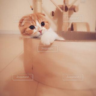 その口を開いてオレンジと白猫の写真・画像素材[1293984]
