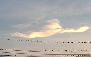 鳳凰と鳥の群れの写真・画像素材[3663155]