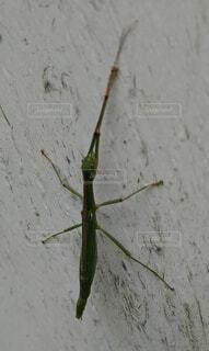 よく分からない虫の写真・画像素材[3652312]