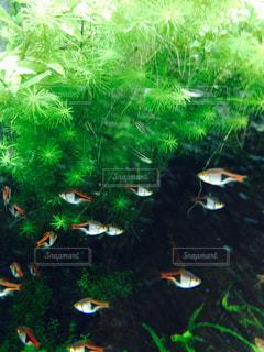 魚の写真・画像素材[154588]