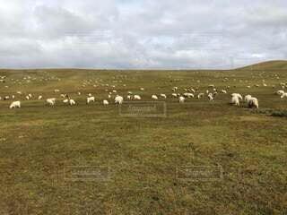 緑豊かな畑の上に立つ羊の群れの写真・画像素材[3747963]