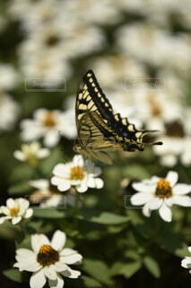 花のクローズアップの写真・画像素材[3652451]