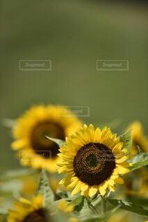 花のクローズアップの写真・画像素材[3652455]