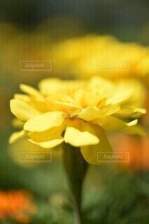 花のクローズアップの写真・画像素材[3652473]