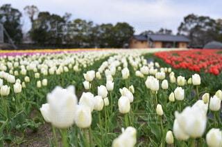 花のクローズアップの写真・画像素材[3652512]