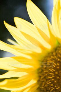 花のクローズアップの写真・画像素材[3653065]