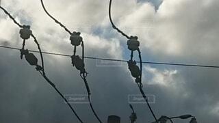 電線と碍子の写真・画像素材[3653309]