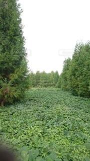 庭の緑の植物の写真・画像素材[3654091]