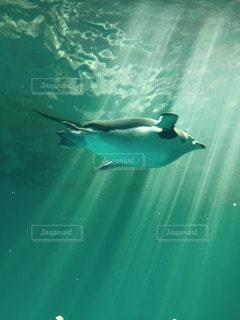 海の写真・画像素材[21934]