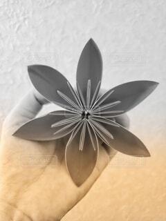 花のクローズアップの写真・画像素材[3695860]