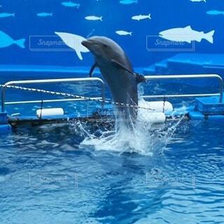 青い水で泳ぐイルカの写真・画像素材[3665676]
