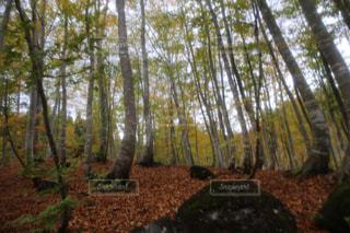 森林の写真・画像素材[152748]