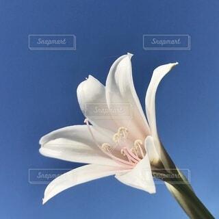 花のクローズアップの写真・画像素材[3663343]