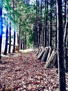 森の中の木の写真・画像素材[4343848]